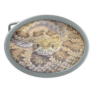 Serpent de hochet de prairie boucles de ceinture ovales