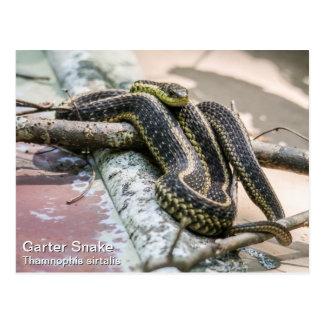 Serpent de jarretière carte postale