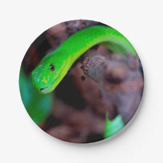 Serpent de python assiettes en papier