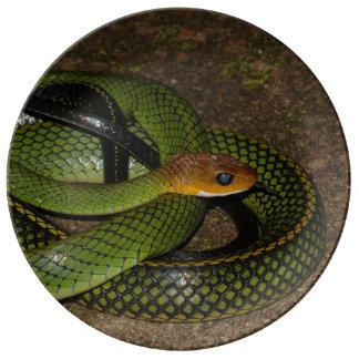 Serpent de rat vert de Bush Assiette En Porcelaine