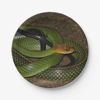 Serpent de rat vert de Bush Assiettes En Papier