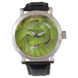 Serpent de rat vert de Bush Montres Bracelet