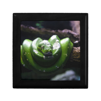 Serpent vert boîte à souvenirs
