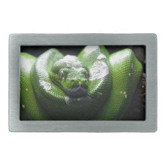 Serpent vert boucle de ceinture rectangulaire