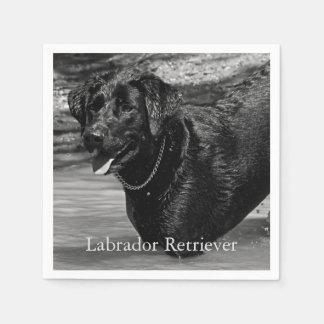 Serviette Jetable Labrador retriever noir dans l'eau