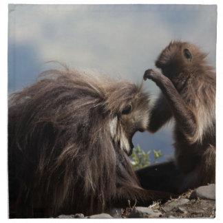 Serviettes De Table Deux babouins de gelada (gelada de Theropithecus)