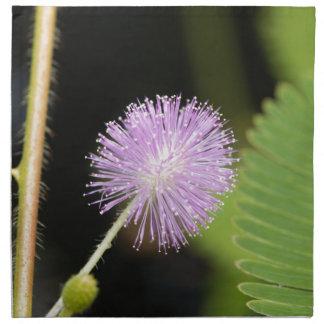 Serviettes De Table Plante sensible (pudica de mimosa)