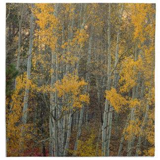 Serviettes De Table Région sauvage de forêt d'Aspen