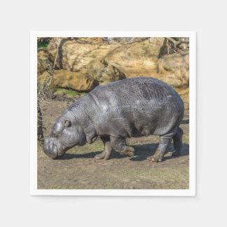 Serviettes En Papier Hippopotame pygméen au zoo