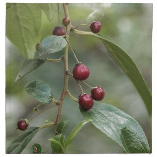 Serviettes En Tissus Fruits d'un nerprun brillant de feuille
