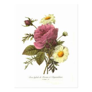 S'est levé et le chrysanthème carte postale