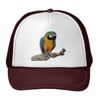 Seul casquette de perroquet orange