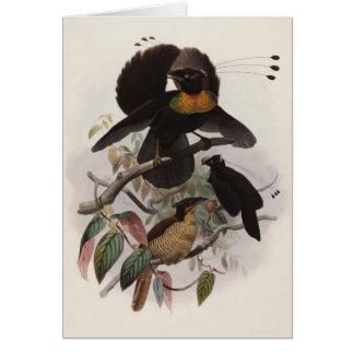 Sexpennis de Parotia - oiseau du paradis Six-à Carte De Vœux