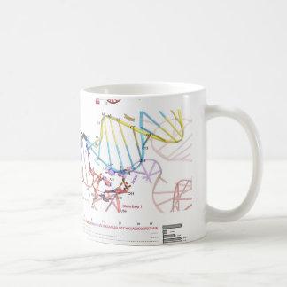 sgRNA et son ADN de cible Mug