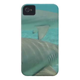 shark coques Case-Mate iPhone 4