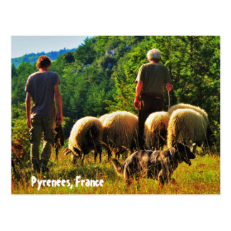 Shepherding en France Carte Postale