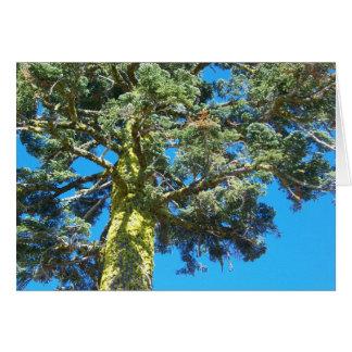 Sierra arbre de Nevada Carte De Vœux