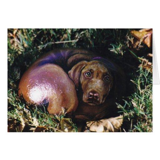 """""""Sierra"""" carte de roche de chien"""