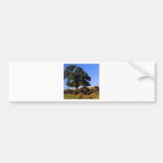 Sierra collines d'arbres de Nevada Autocollant Pour Voiture