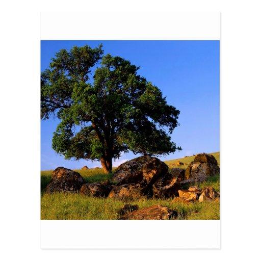 Sierra collines d'arbres de Nevada Cartes Postales