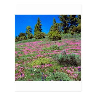 Sierra collines la Californie de printemps de Cartes Postales