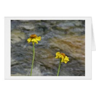 Sierra fleurs sauvages par la crique en bois carte de vœux