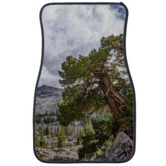 Sierra genévrier et arbres d'arbre tapis de sol