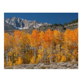 Sierra orientale couleurs d'automne cartes postales