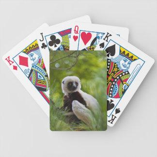 Sifaka de Coquerel dans la forêt 2 Cartes À Jouer
