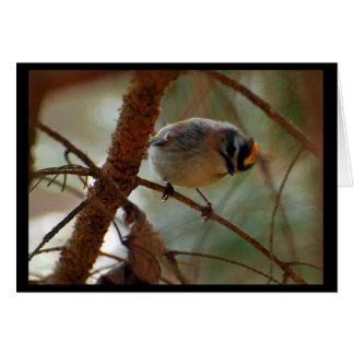 Signant - la carte de note d'oiseau (blanc)