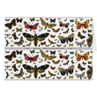 Signet ancien d'image de papillons colorés cartes de vœux