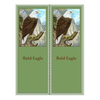 Signets d'Eagle chauve Birding Carte Postale
