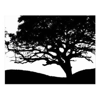 Silhouette d arbre carte postale