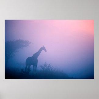 Silhouette de girafe (Giraffa Camelopardalis) Affiche