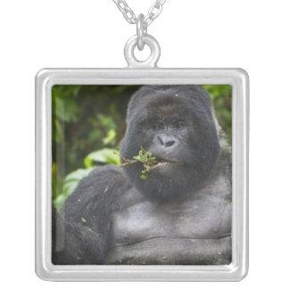 Silverback de gorille et de vieillissement de pendentif carré