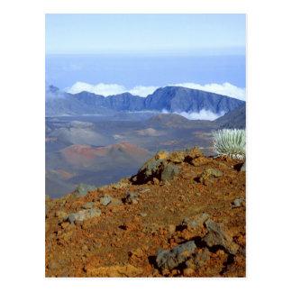 Silversword sur la jante de cratère de Haleakala Carte Postale