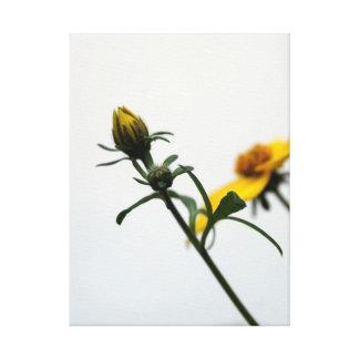 Simplicité - photographie florale - toile impression sur toile