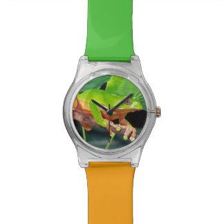 Singe bicolore géant Treefrog, Phyllomedusa Montres Bracelet