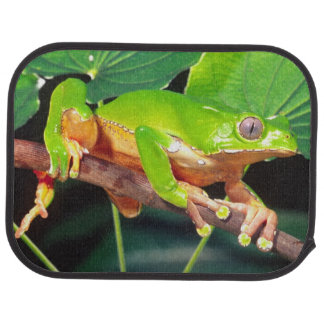 Singe bicolore géant Treefrog, Phyllomedusa Tapis De Sol