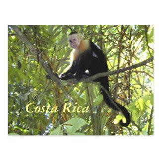 Singe Costa Rica de capucin de carte postale