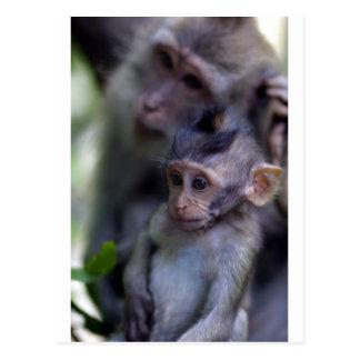Singe de macaque mignon de bébé carte postale