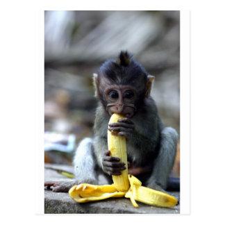 Singe de macaque mignon de bébé mangeant la banane carte postale