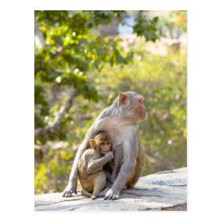 Singes de Macaque de rhésus de mère et de bébé sur Carte Postale
