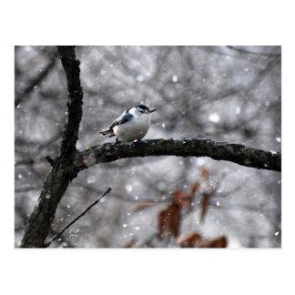 Sittelle dans la carte postale de neige
