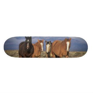 Skateboard 20,6 Cm Les Etats-Unis, Wyoming, près du groupe de Cody de