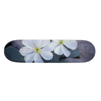Skateboard 20,6 Cm Na, Etats-Unis, Utah, arque le NP, oenothère