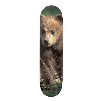 Skateboard 20 Cm Les Etats-Unis, Alaska, parc national de Denali,