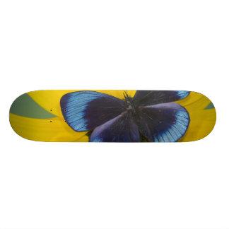 Skateboard 20 Cm Photographie de Sammamish Washington du papillon