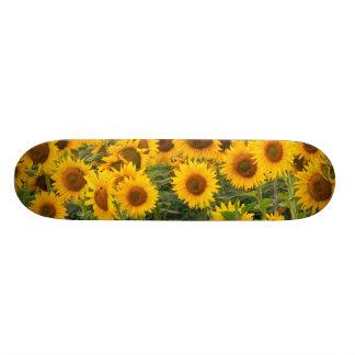 Skateboard Customisable Na, Etats-Unis, le Colorado, tournesols