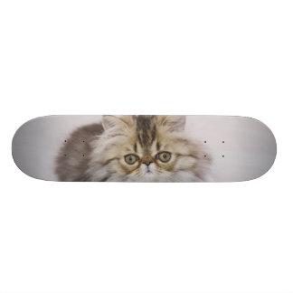 Skateboard Old School 18,1 Cm Chat persan, catus de Felis, chat tigré de Brown,